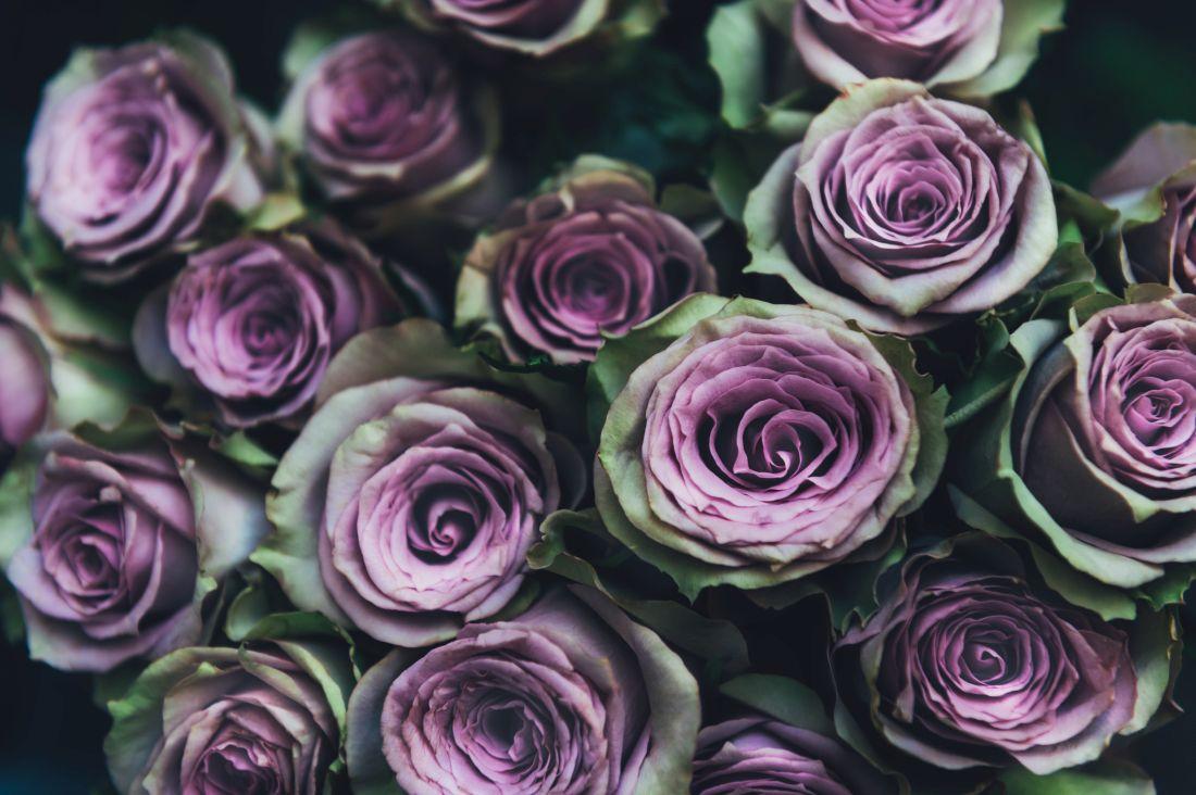 Tot ce trebuie să știi despre despre trandafirii criogenați